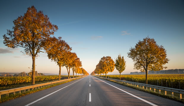 open road in vineyard setting